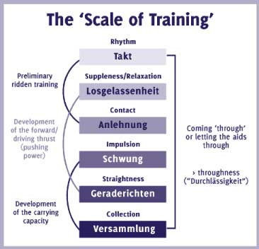 Illustration of the scales of training